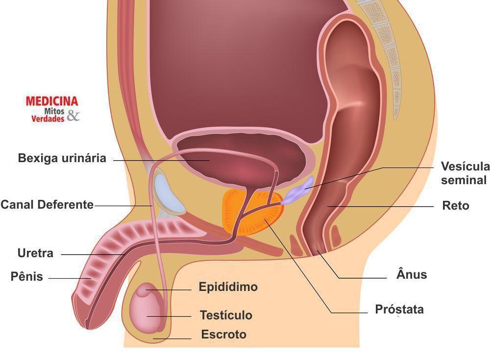 Vasectomia e o desempenho sexual