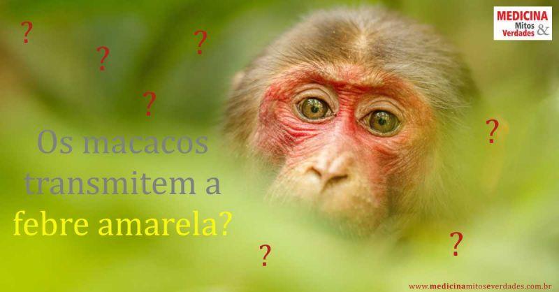 Macacos transmitem a febre amarela?
