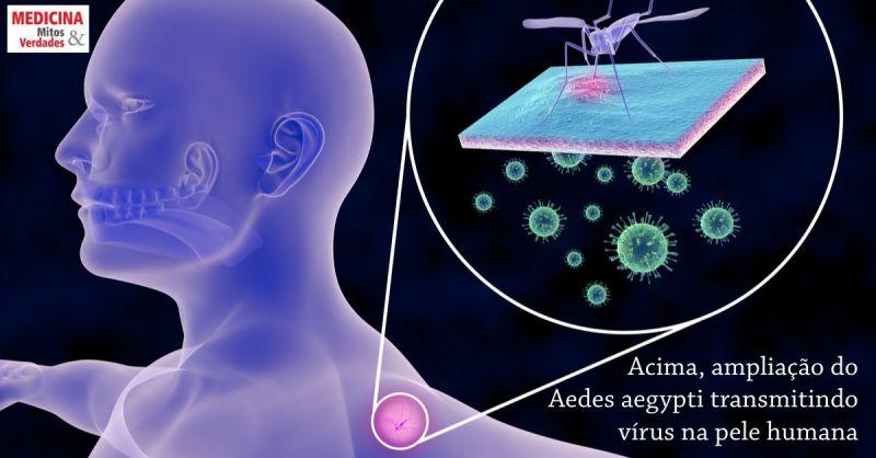 Todos os mosquitos Aedes aegypti transmitem vírus?