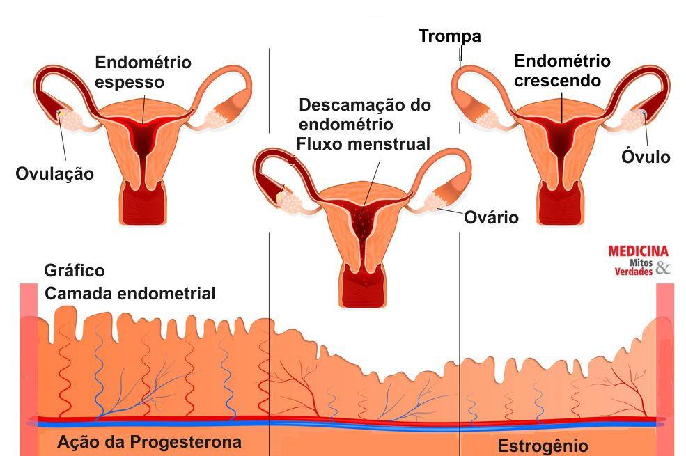 Causas de coágulos na menstruação