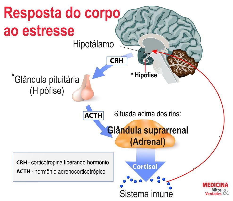O estresse aumenta o cortisol, engorda e causa doenças